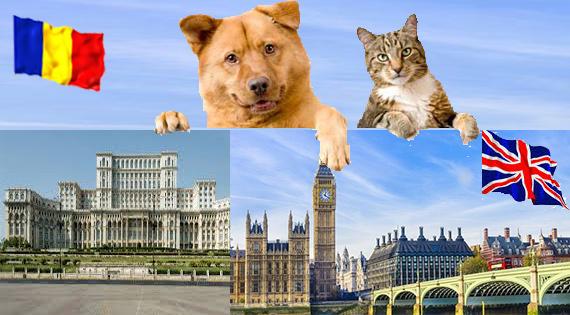 Transport animale de companie caini si pisici in Anglia