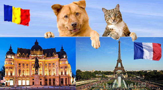 Transport animale de companie caini si pisici in Franta