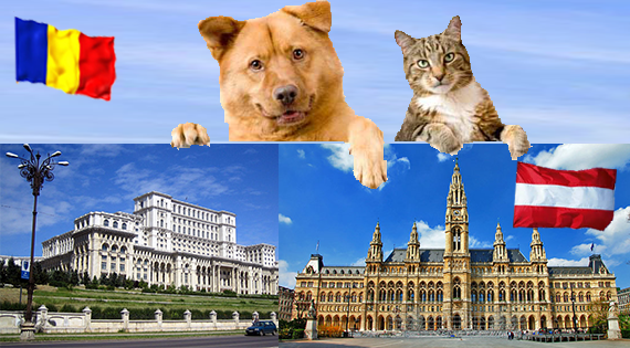 Transport animale de companie caini si pisici in Austria