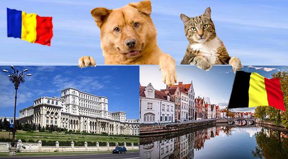 Transport animale de companie caini si pisici in Belgia