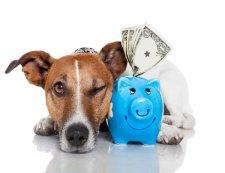 Modalitati de plata transport caini si pisici