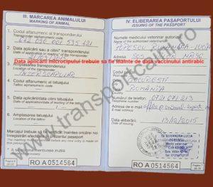 Model pasaport completat corespunzator