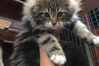 transport caini si pisici anglia 25-10-2017