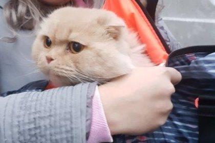 transport caini pisici anglia franta