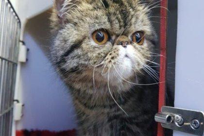 transport caini si pisici austria 13.12.2018