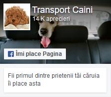pagina facebook transport caini si pisici