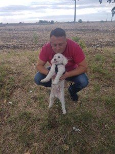 transport-caini-bichon-6