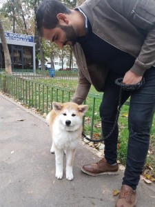 transport-animale-akita inu