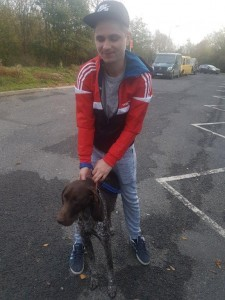 transport-caini-german shorthaired pointer