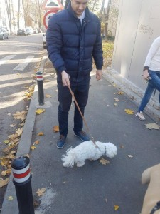 transport-catei-bichon (2)