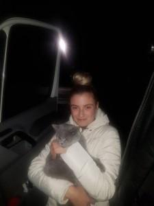 transport-pisici