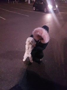 transport-catei-bichon (4)