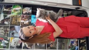 4-transport-pisici-09-iunie-2016