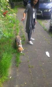 8-transport-beagle-germania-2016-iunie