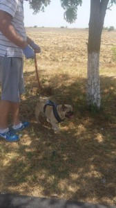transport-catei-pug