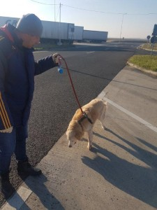 transport-animale-retriever