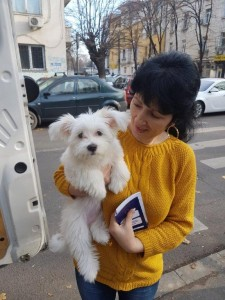transport-caini-bichon
