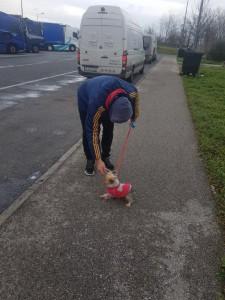 transport-caini-yorkshire terrier