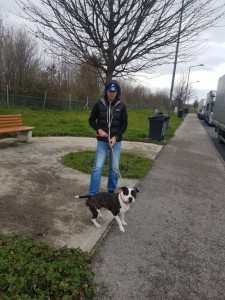 transport-catei-amstaff