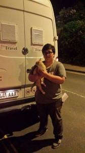 transport pisica
