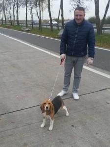 beagle transport uk