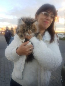 transport-pisici-maine coon (3)