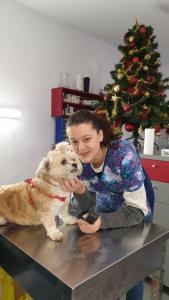 Transport Shitzu dog Romania Anglia