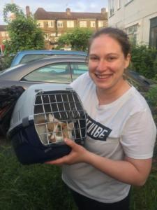 transport-caini-pisici-06-iunie-2018-019