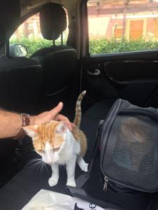 transport-caini-pisici-06-iunie-2018-038