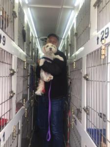 transport-caini-pisici-06-iunie-2018-056