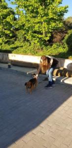 transport-caini-pisici-10-mai-2018-023