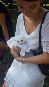 transport-caini-pisici-26-iulie-2018-001