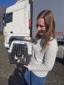 transport-caini-pisici-franta-austria-germania-21-02-2019 (22)