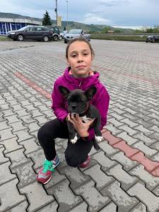 transport-caini-si-pisici-anglia-germania-franta-19-11-2020-011