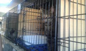 transport-pisica-uk-iulie-2015
